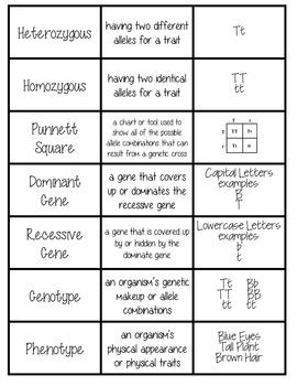 Genetics Card Sort Vocabulary Activity