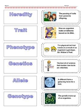 Cut-n-Paste Vocabulary: Genetics