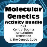 Molecular Genetics: DNA, Central Dogma, Transcription & Translation High School