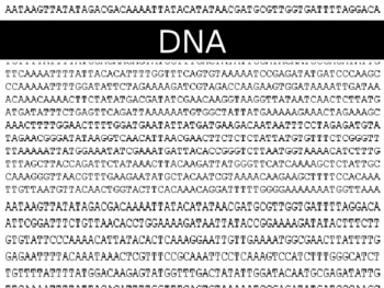 123 Dna Replication Worksheet Answers