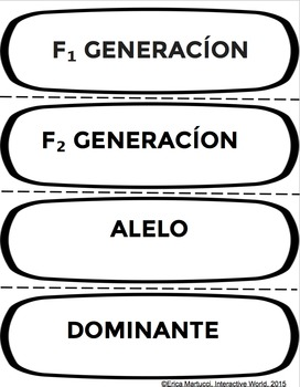 Genetics, DNA, and Gene Technology Word Wall Set with Spanish Tags