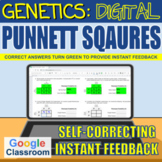 Genetics - Digital Punnett Squares - Self-correcting | Dis