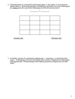 Genetics Dihybrid Punnett Square Practice Packet