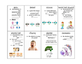 Genetics Graphic Organizer