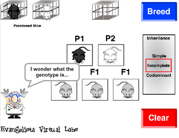 Genetics Guided Inquiry Virtual Lab