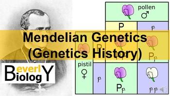 Genetics History (Mendelian Genetics) PowerPoint (with free worksheets)