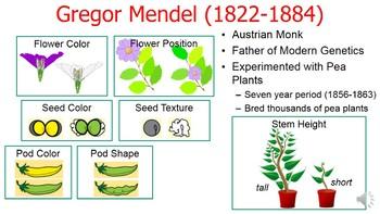 Genetics (Mendelian) History PowerPoint: (free Punnett ...
