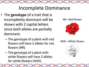 Genetics: Inheritance Part 2 Powerpoint Slide Show