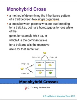 Genetics and Heredity Interactive Flip Book with FIVE quizzes