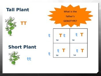 Genetics - Mendel and Punnett Square Introduction PowerPoint