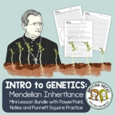 Punnett Squares - Mendel and Inheritance