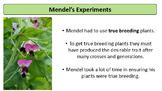 Genetics - Mendelian - Introduction with Problem Worksheet