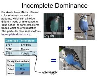 Genetics-  Patterns of Inheritance