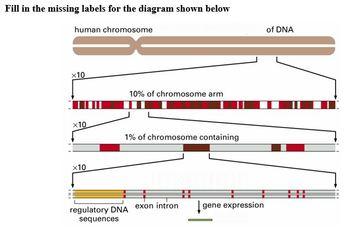Genetics Part C - DNA, Genes & Chromosomes