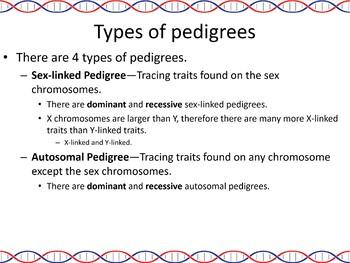 Genetics: Pedigrees Powerpoint Slide Show