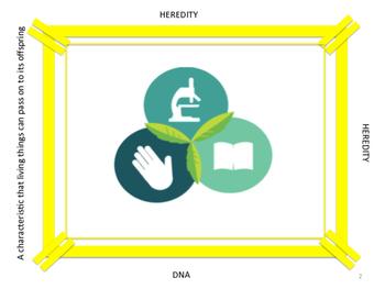 Genetics Pinwheel Vocabulary Puzzle....Life Size!