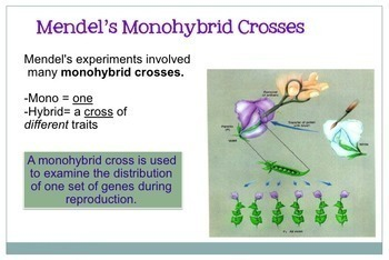 Genetics Notes: Introduction to Genetics PowerPoint
