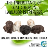 Genetics Project - The Inheritance of Coat Color in Labrador Retrievers