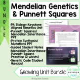 Genetics PPT & Notes Punnett Squares Protein Synthesis Bio