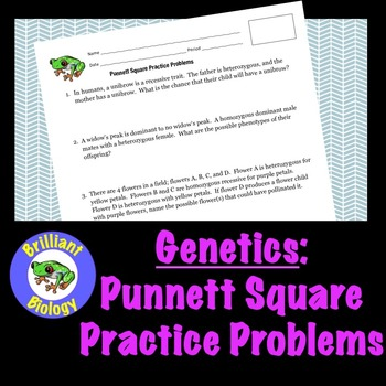Genetics: Punnett Square Practice {27 Questions with Answer Key}