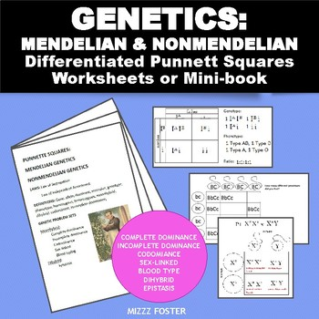 Mendelian Genetics Worksheet Teaching Resources Teachers Pay Teachers