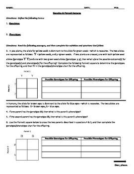 Genetics & Punnett Squares Worksheet