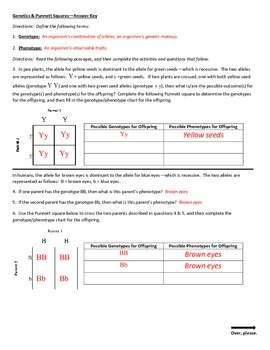 Genetics & Punnett Squares Worksheet
