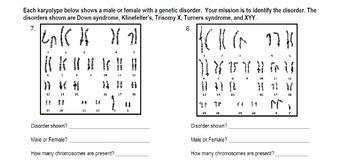 Genetics: Reading Karyotype Practice Bundle (includes PowerPoint)