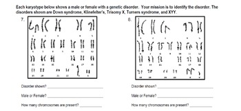 Genetics: Reading Karyotypes Practice