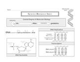 Genetics Reference Sheet