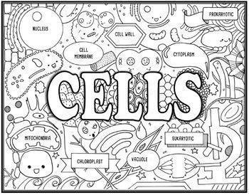 Genetics Seek and Find Science Doodle Page Bundle