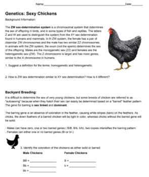 Genetics:  Sexy Chickens (KEY)