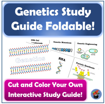 Genetics Study Guide: Foldable Activity