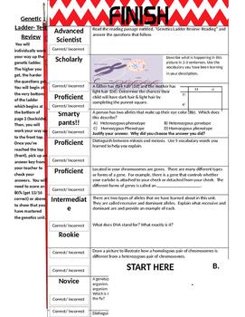 Genetics Study Guide Ladder Activity