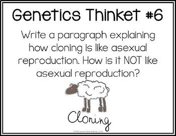 Genetics - Task Cards