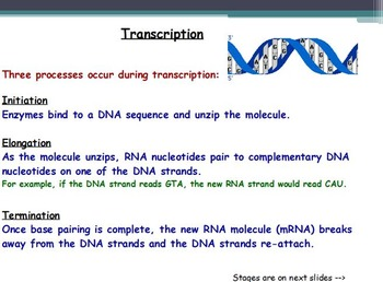 Genetics - Translation and Transcription with Worksheet