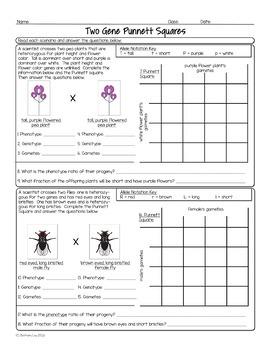 Genetics Unit Homework Worksheet Bundle By Science With Mrs Lau Tpt