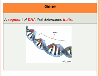 Genetics Vocab and Coding Powerpoint
