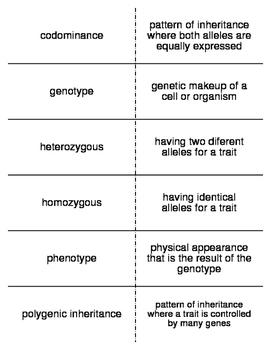 Genetics Vocabulary Flash Cards for Middle School Science