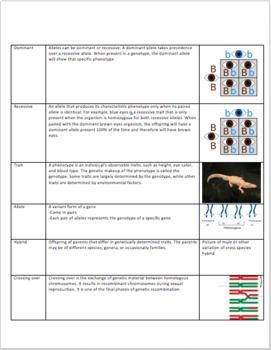 Genetics Vocabulary Worksheet- Heredity, Meiosis, Mitosis, Chromosomes