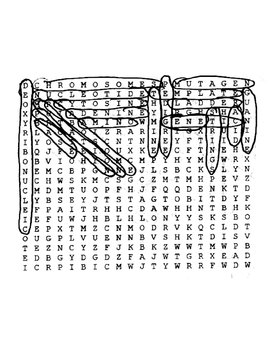 Genetics Wordsearch with Key