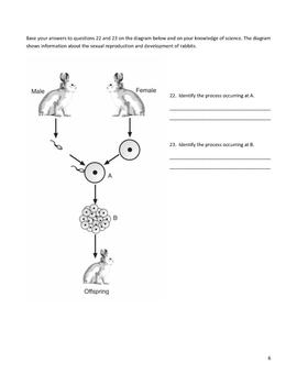 Middle School Biology Genetics Worksheet - Punnett Squares and More
