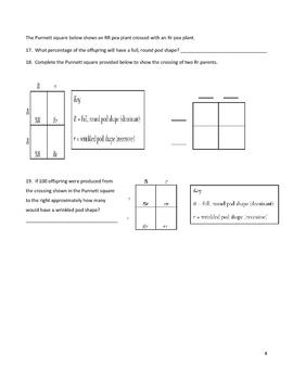 middle school biology genetics worksheet punnett squares and more. Black Bedroom Furniture Sets. Home Design Ideas