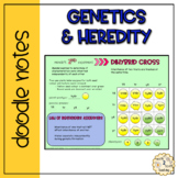 Genetics and Heredity Doodle Notes