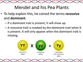 Genetics and Heredity Powerpoint Slide Show