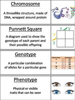 Genetics and Heredity Word Wall Cards