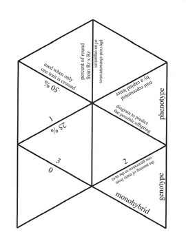 Genetics and Punnett Square Game Puzzle with Worksheet