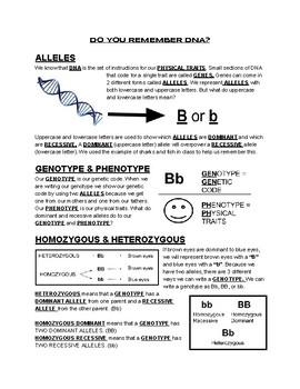 Genetics and Punnett Square Review