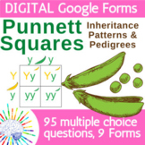 Genetics and Punnett Squares Review Questions   DIGITAL Go