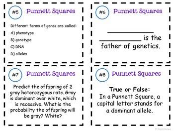Genetics and Punnett Squares Task Cards